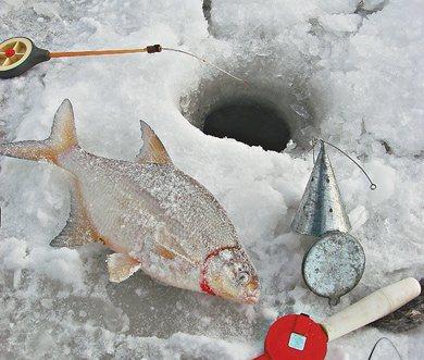 Зимние прикормки. Особенности прикорма рыбы зимой