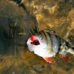 Особенности лова рыб в осенний период
